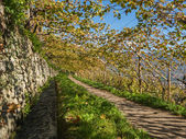 Algunder Waalweg South Tyrol Merano — Stock Photo