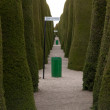 Punta Arenas cemetary alley of green trees — Stock Photo