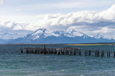 Lake at Puerto Natales in Chile with birds — Stock Photo