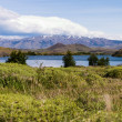 Torres del paine in Chilean National Park Largo Nordenskjoeld bushes — Stock Photo