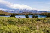 Torres del paine in Chilean National Park Largo Nordenskjoeld bushes — Stock Photo