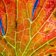 Stock Photo: Autumn leaf macro with depth of field