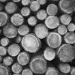 Stock Photo: Cutted wood in monochrome