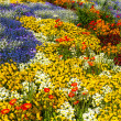 Flower bed top view in different colours — Stock Photo