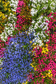 Flower bed with beautiful blossoms vertical — Stock Photo