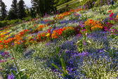Huge flower bed top view in different colours — Stock Photo