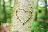 Heart scratched into a young tree — Stock Photo