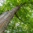 Stock Photo: Diagonal tree trunk in vertical composition with green leaves
