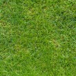 Stock Photo: Green lawn isolated in plan view