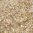 Wooden mulch on the ground in a garden — Stock Photo