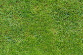 Green lawn isolated in plan view — Stock Photo