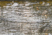 Wooden plank with moss — Foto Stock