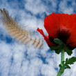 Poppy and feather on a background blue sky with clouds — Stock Photo
