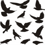 Pigeons — Stock Vector #23312658