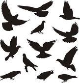 Pigeons — Stock Vector