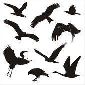 Bird of prey — Stock Vector