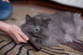 Cat is being combed — Stock Photo