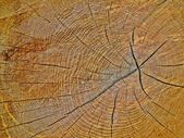 The wood of an oak tree — Stock Photo