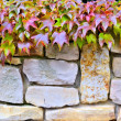 A stone wall and plants — Stock Photo #22535711
