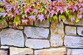 A stone wall and plants — Stock Photo