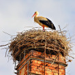 Royalty-Free Stock Photo: A stork standing in its nest