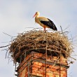 A stork standing in its nest  — Stock Photo