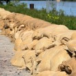 Filled sandbags as protection against floods — Stock Photo #26498333