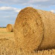 Round straw bales on a harvested field — Stock Photo