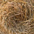 Rolls of straw on a field — Stock Photo #30980811