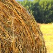 Rolls of straw on a field — Stock Photo #30980835