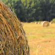 Rolls of straw on a field — Stock Photo
