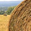 Rolls of straw on a field — Stock Photo #30980901