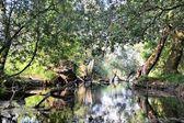 Přirozeného lesa v braniborsku — Stock fotografie