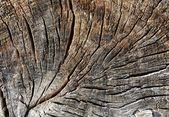Structure of a wooden surface — Stock Photo