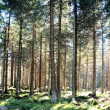 Stock Photo: Forest at foot of Brocken