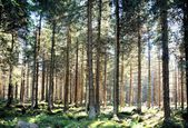 Forest at the foot of the Brocken — Stock Photo