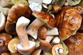 Różne grzyby jadalne — Zdjęcie stockowe