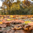 Autumn leaves on a road — Stock Photo