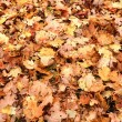 Autumn leaves of a road — Stock Photo