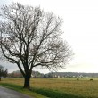 A tree on the roadside in the country — Stock Photo