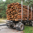 Sawed-off tree trunks are ready for transport — Stock Photo