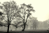 Autumn landscape engulfed in fog — Stock Photo
