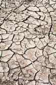 Sequía — Foto de Stock