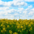 Rapeseed field — Stock Photo #44765123