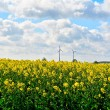 Rapeseed field — Stock Photo #44765869