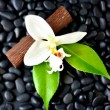Black Spa Rocks & White Flower — Stock Photo #27356717