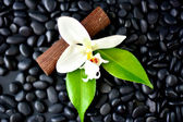 Black Spa Rocks & White Flower — Stock Photo