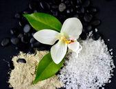 Sea Salt & Flowers — ストック写真