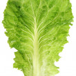 Lettuce leaf — Stock Photo #22276903