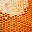 Honeycomb wax cell — Stock Photo
